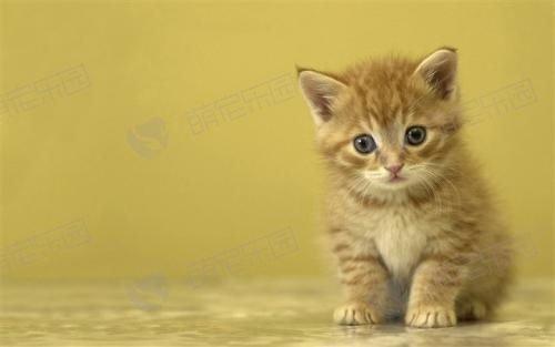 为什么说好奇心会害死猫?